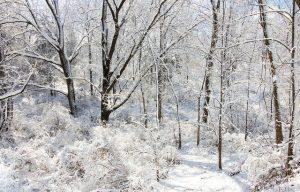 Picture of a snowy scene in Grass Lake, MI