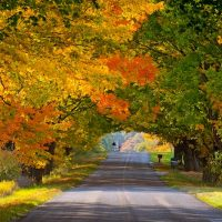 Image of a road with trees with colorful fall leaves